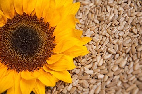 lule-dielli-poezi-romance-bukuri-vaj-dieta